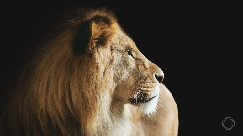 2016-8_LT-LionNotSafe